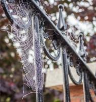 Cobwebs glisten in the morning dew